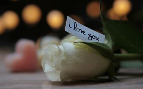 メッセージ付きの白いバラ
